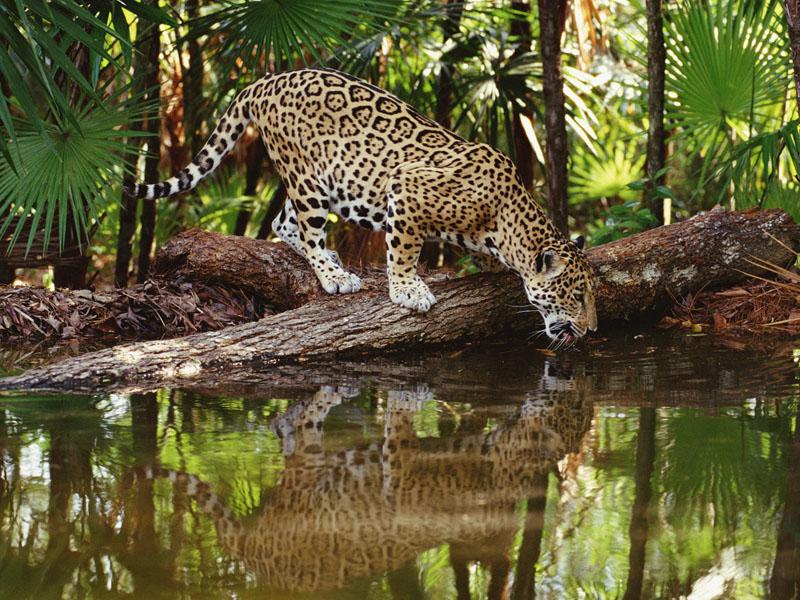 Флора и фауна Мексики