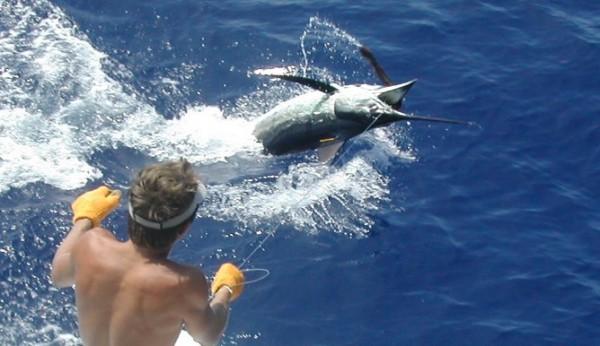 Лос-Кабос морская рыбалка
