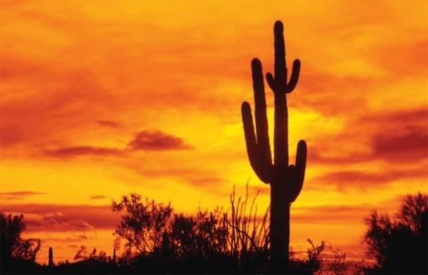Мексика пустыня