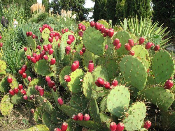 Мексиканская флора