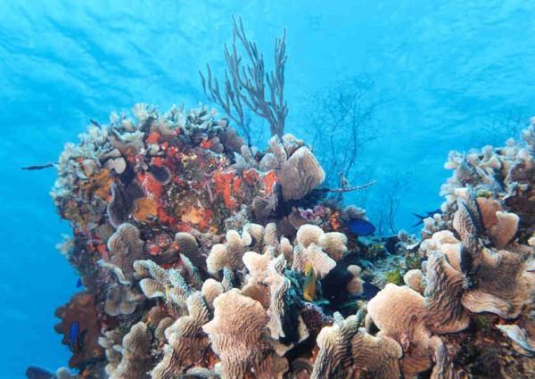 Мексика коралловые тунели