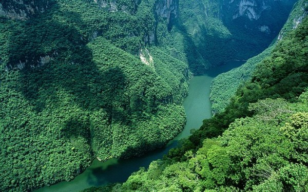 Джунгли Мексики