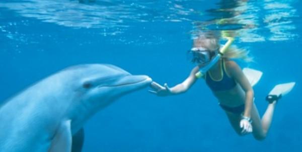 Мексика плавать с дельфинами