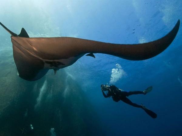 Подводные обитатели Шел-ха Мексика