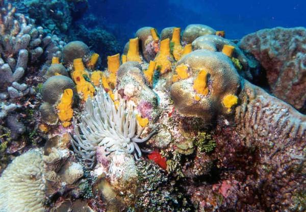 подводный мир Косумеля Мексика
