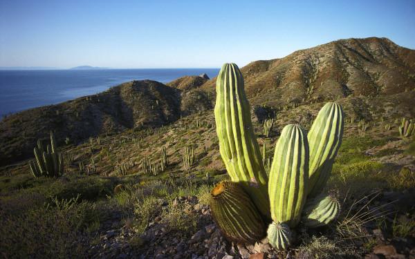 Климат Мексики