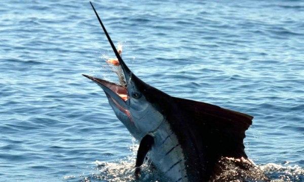 Мексика, ловля рыбы