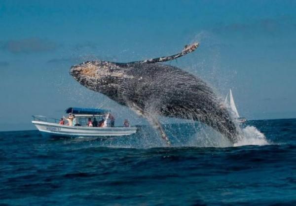 Китовый пляж Мексика